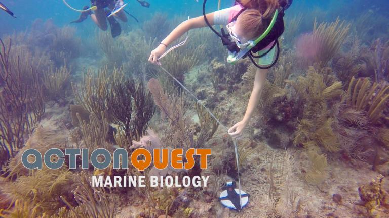 marine-biology-teen-camps-imgsrc-mom